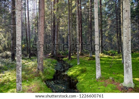 Autumn mossy forest river stream landscape. Mossy forest river stream view. Autumn forest trees moss scene. Fairytale mossy forest landscape