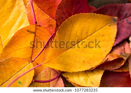 Autumn motifs with leaves - different colors