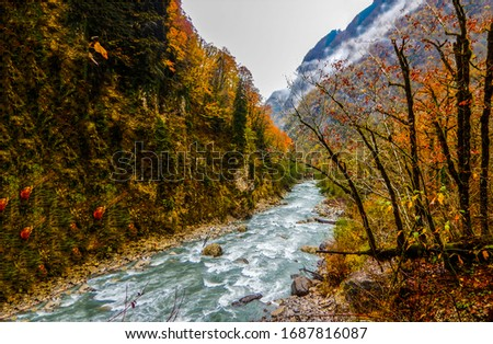 Autumn mountain forest river wild. Forest river wild in autumn. Autumn mountain forest river wild