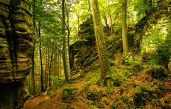 Autumn mountain forest trees view. Forest trail in autumn. Forest mountain rock trail