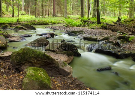 autumn mountain stream in a green forest