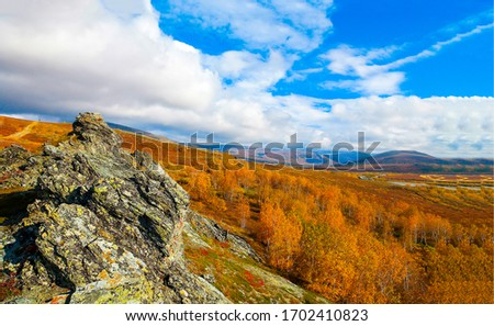 Autumn mountain valley forest landscape. Mountain valley forest in autumn