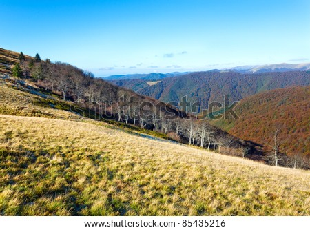 Autumn mountains  with a stark bare trees on forest edge in front (Carpathian, Ukraine).