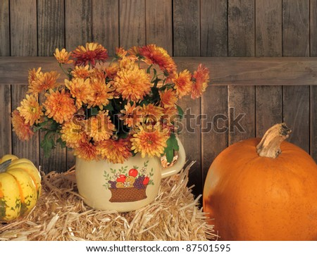 Autumn mums on a hay bale against a rustic wood fence #87501595