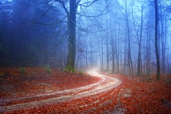 Autumn mysterious forest with road.