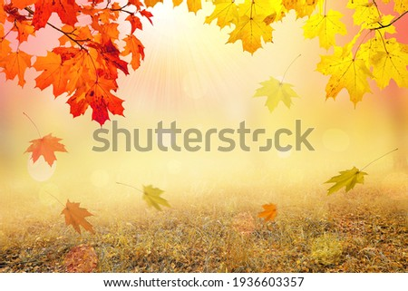 Autumn natural background, design, banner or template. Yellow and red maple leaves are flying and falling down. Autumnal landscape.