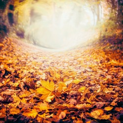 Autumn nature background with colorful fallen leaves, fall nature, frame