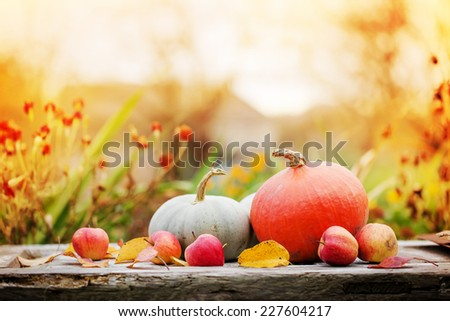 Autumn nature concept. Fall pumpkins and apples on wooden rustic table. Thanksgiving dinner