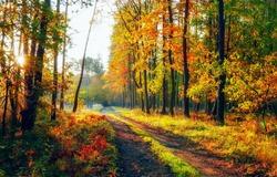 Autumn nature forest road landscape
