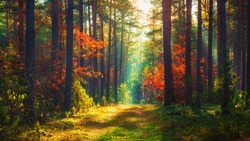Autumn nature landscape of colorful forest in morning sunlight
