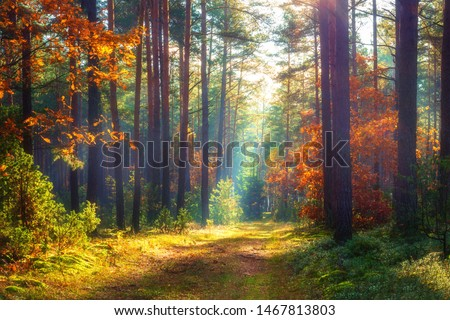 Autumn nature landscape. Sunny autumn forest. Beautiful colorful trees in woodland. Scenic wild nature