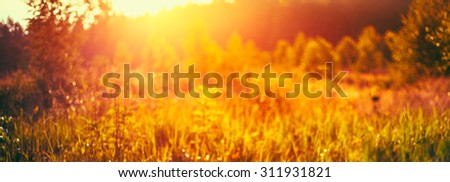 Autumn Nature Meadow Yellow Dry Grass Natural Blurred Absract Background With Bright Sunlight. Bokeh, Boke  With Sunlight Yellow And Orange Colors Toned Instant Filtered Image
