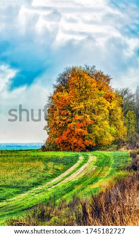 Autumn nature outdoor trees view