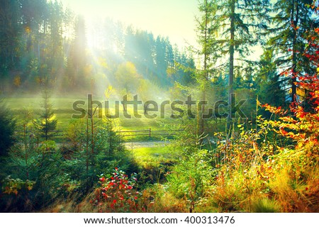 Autumn Nature scene. Beautiful morning Misty Old Forest and meadow with Sun Rays, Shadows and Fog. Forest, Park, Countryside