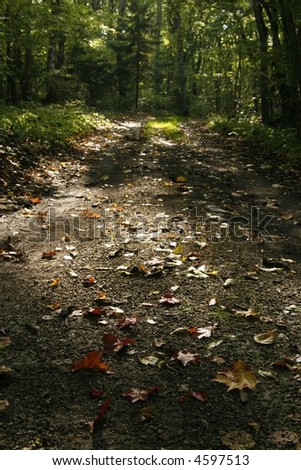autumn nature: secluded road with fallen colorful leaves on it
