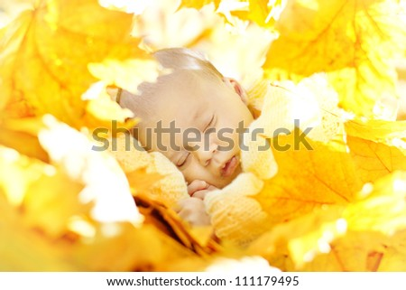 Autumn newborn baby sleeping in maple leaves. Close up portrait.