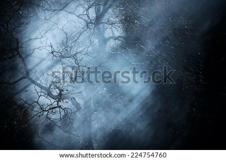 Autumn night dark fantasy black fog forest tree background #224754760