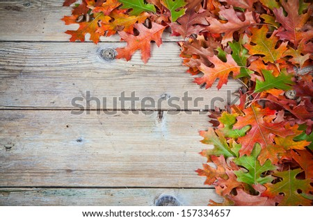 Autumn oak leaves on a old wooden background.