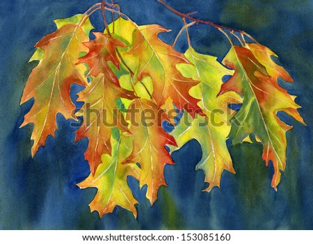 Autumn Oak Leaves on Dark Background. Watercolor illustration, painting, of rust colored, orange and yellow oak leaves with a dark, blue, background painted wet in wet.