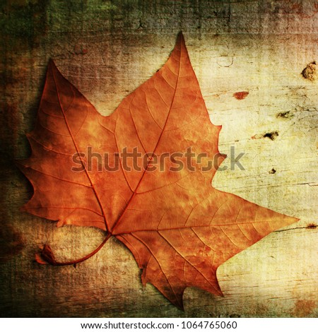 autumn on wooden background
