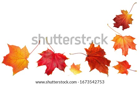 Autumn orange  leaves falling down Isolated on white background