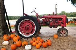 Autumn orange pumpkins sitting near an old tractor at a fall festival at a local pumpkin patch.