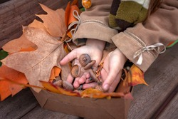 Autumn organic harvest. Cute girl holding a box with golden leaves, cones and acorns that she gathered in the park, diy with fall nature