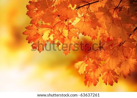 Autumn outdoor photography