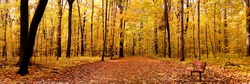 Autumn Panorama
