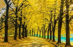 Autumn park alley landscape. Yellow autumn colors. Autumn park bench alley landscape