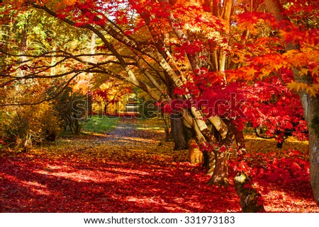 autumn park as nice natural background