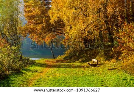 Autumn park bench landscape. Golden autumn park bench view. Autumn forest park bench