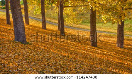 Autumn Park Fall Landscape