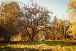 Autumn park on sunny day with a single couple sitting on a swing under the tree