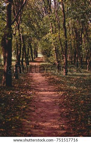 autumn park path