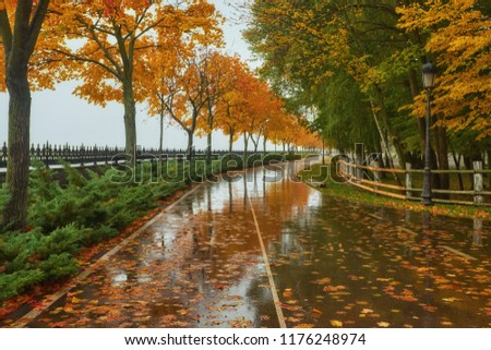 autumn park, rainy background, autumn landscape background rain texture in an October park, walk in bad weather, drops of water, windy weather, bad weather, sad mood