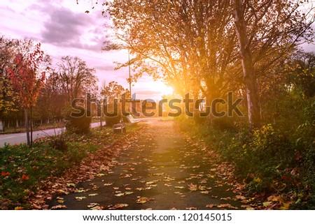 Autumn park\'s path in evening glow aftter rain