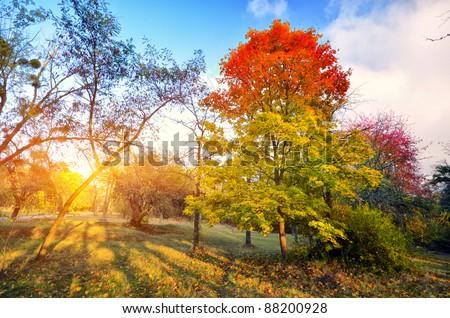 autumn park through which the sun shines