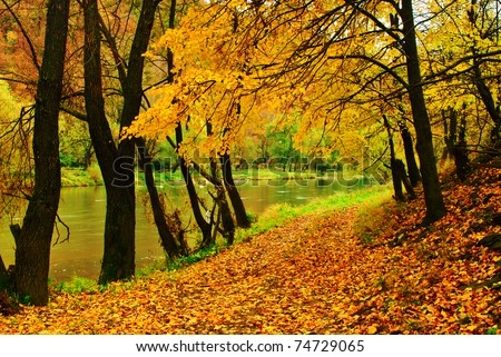 Autumn park with river is running down in autumnal forest