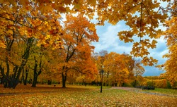 Autumn park with yellow leaves.