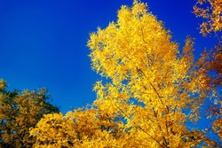 Autumn park, yellow leaves of trees against the blue sky, golden autumn, horizontal photo, place for text, beautiful sunny weather, autumn background