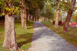 Autumn path in a park with trees of golden, green, and red leaves. The location of the birch and maple trees forms a tunnel with a dark center at the end of the gravel footpath.  The sun is shining.