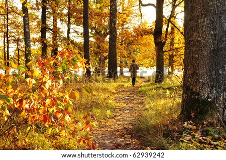 Autumn path in sunrise
