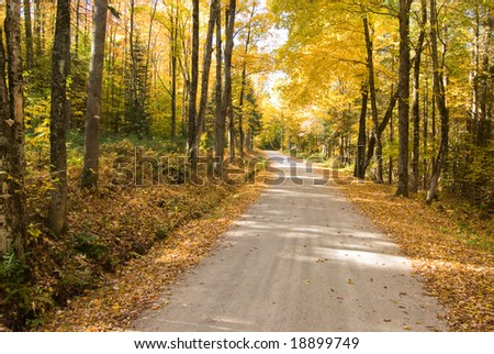 Autumn path winding through the woods