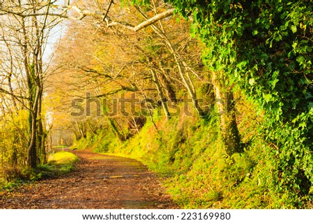 Autumn Pathway alley Co.Cork, Ireland. Park road landscape with the autumnal forest. Orange trees leaves.