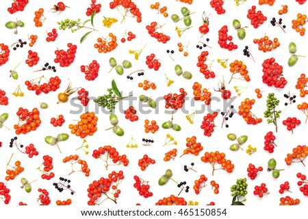 Stock Photo Autumn pattern from rowan, acorns, flowers and various fruits isolated on white background top view. Flat lay styling.