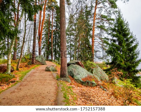 Autumn pine forest trail view. Forest trail in autumn