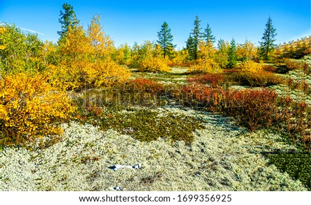 Autumn plain steppe nature view. Autumn steppe landscape. Autumn wilderness nature landscape. Autumn nature landscape