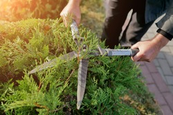 autumn pruning conifer shrubs garden shears