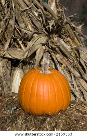 Autumn Pumpkin #2159353